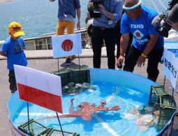 Japan's World Cup Octopus